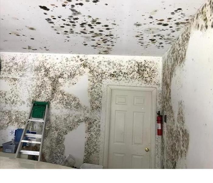 Patterns in mold growth