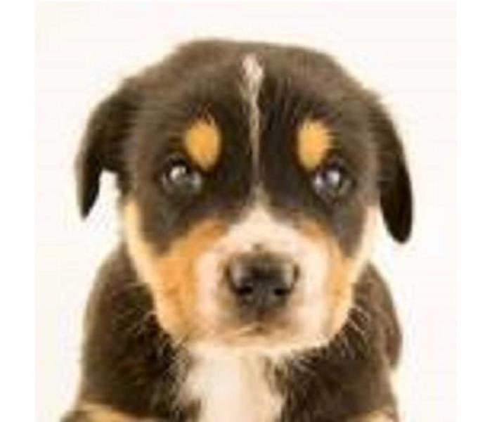 Community Most Popular Dog Breeds
